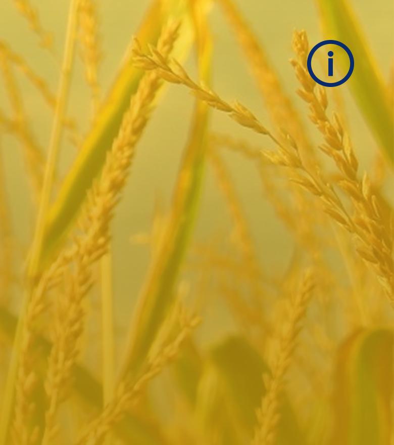 wheatfour 4